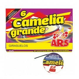 Camelia Grande